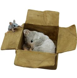 Playful Kitten in Box