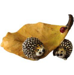 Echidna on Leaf